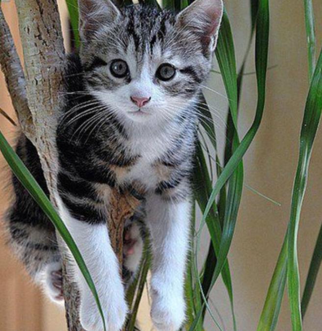 Plantes toxiques : ce que votre chat norvégien ne devrait jamais manger.