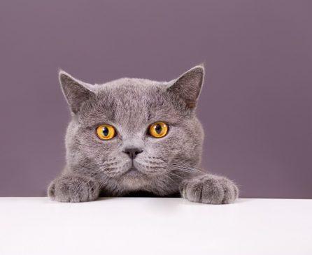 chat en attente de croquettes